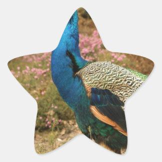 Adesivo Estrela Pavão do verde azul e da laranja