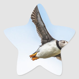 Adesivo Estrela Pena da mosca dos animais selvagens do vôo do mar