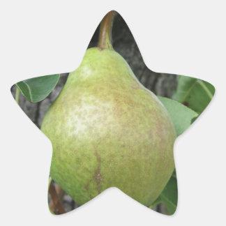 Adesivo Estrela Peras verdes que penduram em uma árvore de pera