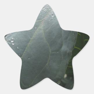 Adesivo Estrela Pingos de chuva nas folhas da couve-flor
