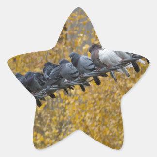 Adesivo Estrela Pombos