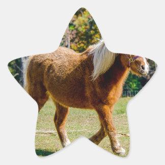 Adesivo Estrela Pônei de Shetland bonito