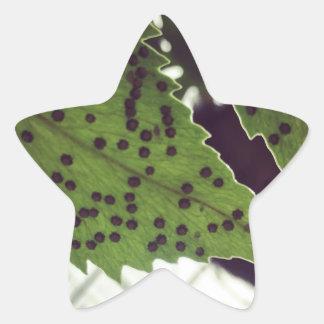 Adesivo Estrela samambaia