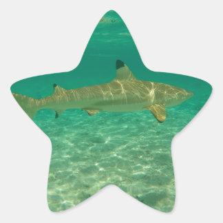Adesivo Estrela Shark in bora bora