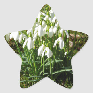 Adesivo Estrela Snowdrops 02,2 (Schneegloeckchen)