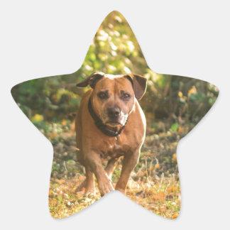 Adesivo Estrela Staffordshire bull terrier