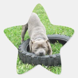 Adesivo Estrela Staffordshire bull terrier, um Chomp,