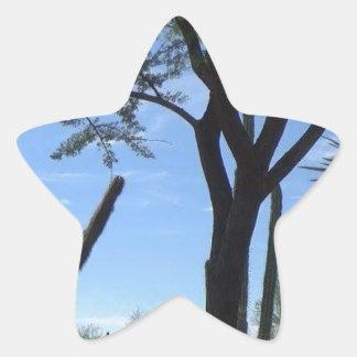 Adesivo Estrela Sudoeste
