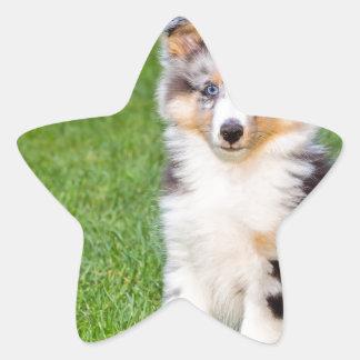 Adesivo Estrela Um cão novo do sheltie que senta-se na grama