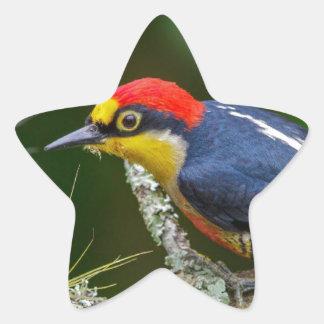 Adesivo Estrela Um pica-pau fronteado amarelo em Brasil