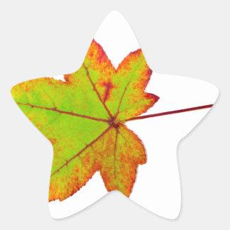 Adesivo Estrela Uma folha de bordo colorida no outono no branco