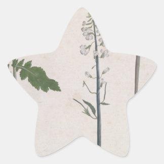 Adesivo Estrela Uma planta de rabanete, uma semente, e uma flor