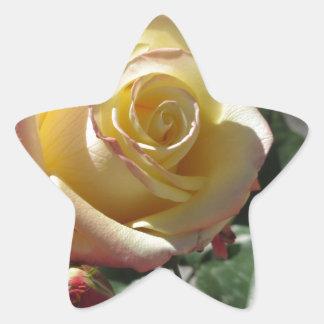 Adesivo Estrela Única flor do rosa amarelo no primavera