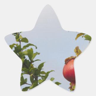 Adesivo Estrela Única fruta vermelha da romã na árvore nas folhas
