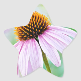 Adesivo Estrela Wildflowers roxos