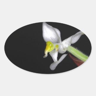 Adesivo Oval A flor da orquídea Ludisia descolora-se