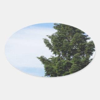 Adesivo Oval Árvore de abeto verde contra um céu claro