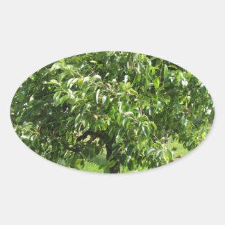Adesivo Oval Árvore de pera com folhas do verde e frutas