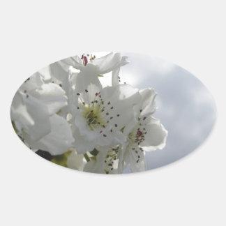 Adesivo Oval Árvore de pera de florescência contra o céu