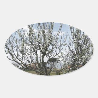 Adesivo Oval Árvore de pera de florescência no jardim Toscânia,