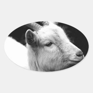 Adesivo Oval cabra
