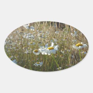 Adesivo Oval Campo das margaridas