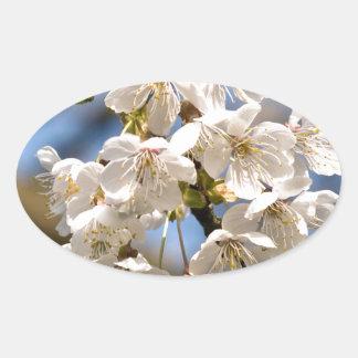 Adesivo Oval Cherry whites de OM de mero