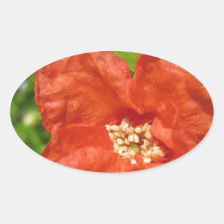 Adesivo Oval Close up da flor vermelha da romã