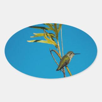 Adesivo Oval Colibri fêmea da rubi-garganta na árvore