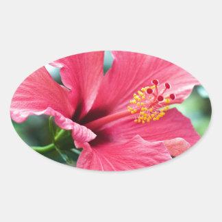 ADESIVO OVAL CONVERSAS HIBISCUS FLOWER