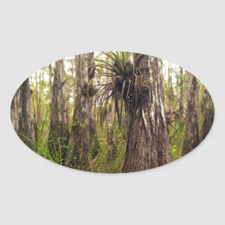 Adesivo Oval Epiphyte Bromeliad na floresta de Florida