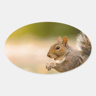 Adesivo Oval Esquilo com fome