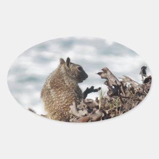Adesivo Oval Esquilo pequeno