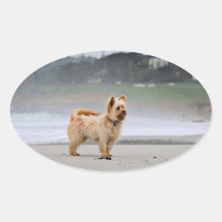 Adesivo Oval Farris - Lucy - raça misturada