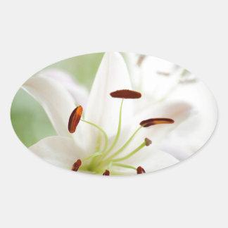 Adesivo Oval Flor do lírio branco inteiramente aberta