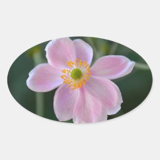 Adesivo Oval Flor japonesa cor-de-rosa da anêmona
