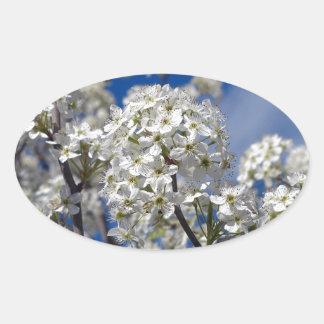 Adesivo Oval Flores da pera de Bradford