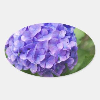 Adesivo Oval Flores de um hydrangea do francês (macrophyl do