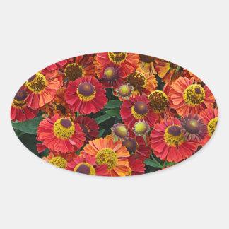 Adesivo Oval Flores vermelhas e alaranjadas do helenium