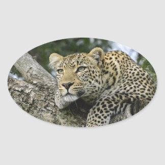 Adesivo Oval Gato selvagem animal do safari de África da árvore