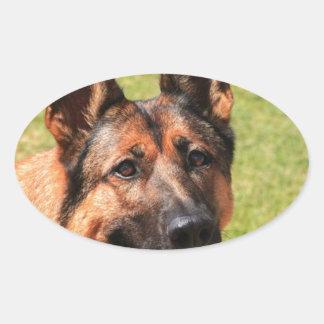 Adesivo Oval German shepherd de Malinois do belga