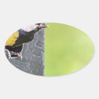 Adesivo Oval Grande pai do melharuco no furo da caixa-ninha