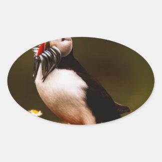Adesivo Oval Ilha animal de Atlântico dos animais selvagens do