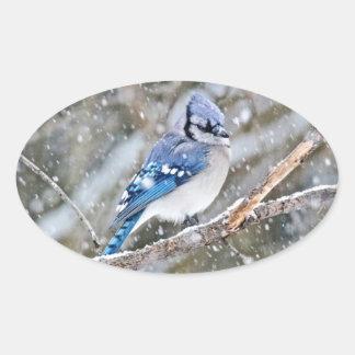 Adesivo Oval Jay azul em uma tempestade de neve