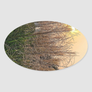 Adesivo Oval Junco no por do sol