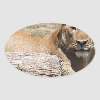 Adesivo Oval Leão