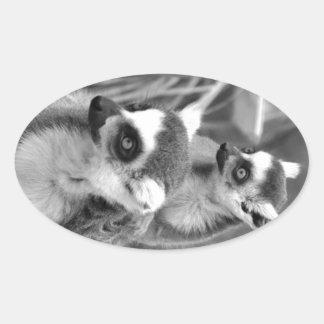 Adesivo Oval lemur Anel-atado com o bebê preto e branco