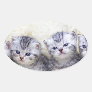 Adesivo Oval Ninho com os quatro gatos de gato malhado novos em
