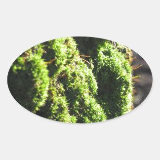 Adesivo Oval O musgo verde no detalhe da natureza de musgo