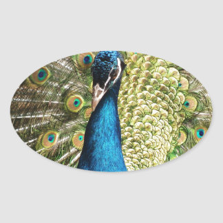 Adesivo Oval O pavão bonito